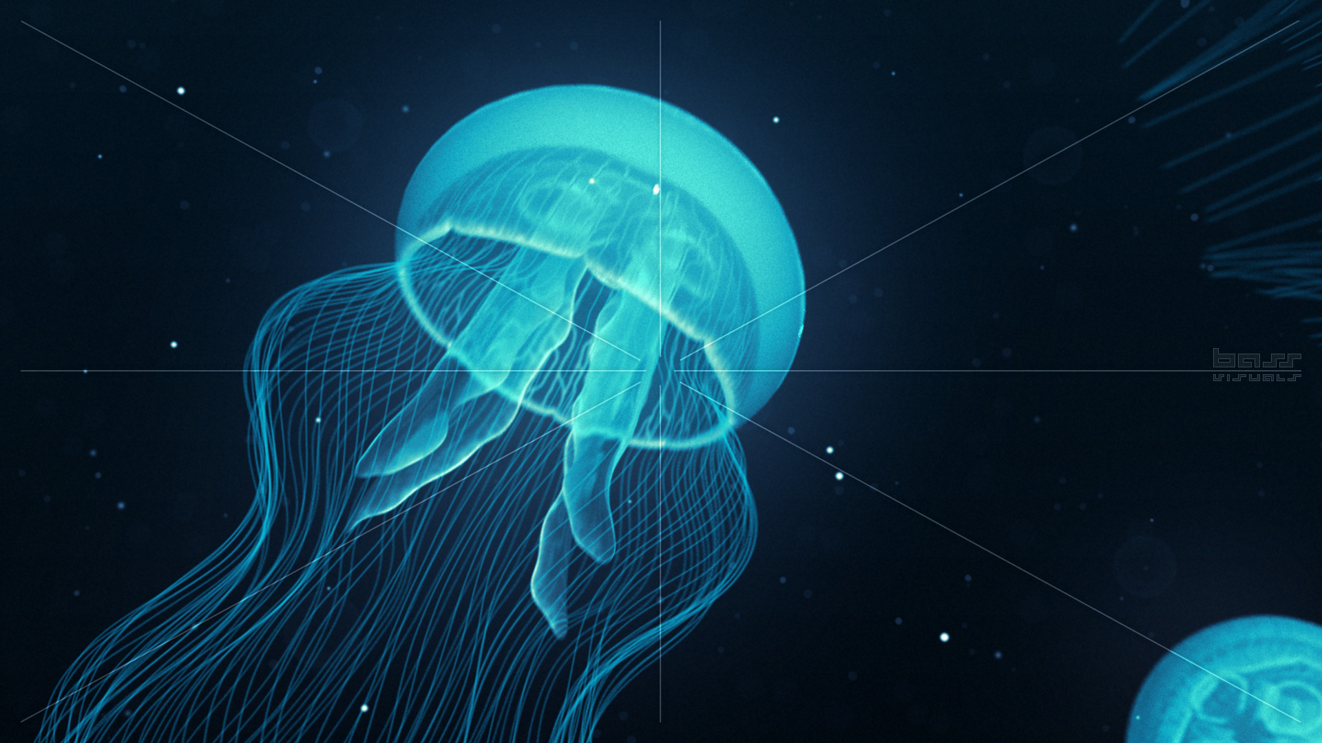 Abyss bass visuals - Jellyfish hd images ...